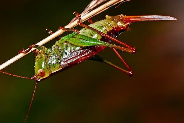 Blogiin_grasshopper_CC0 Public Domain : UKK